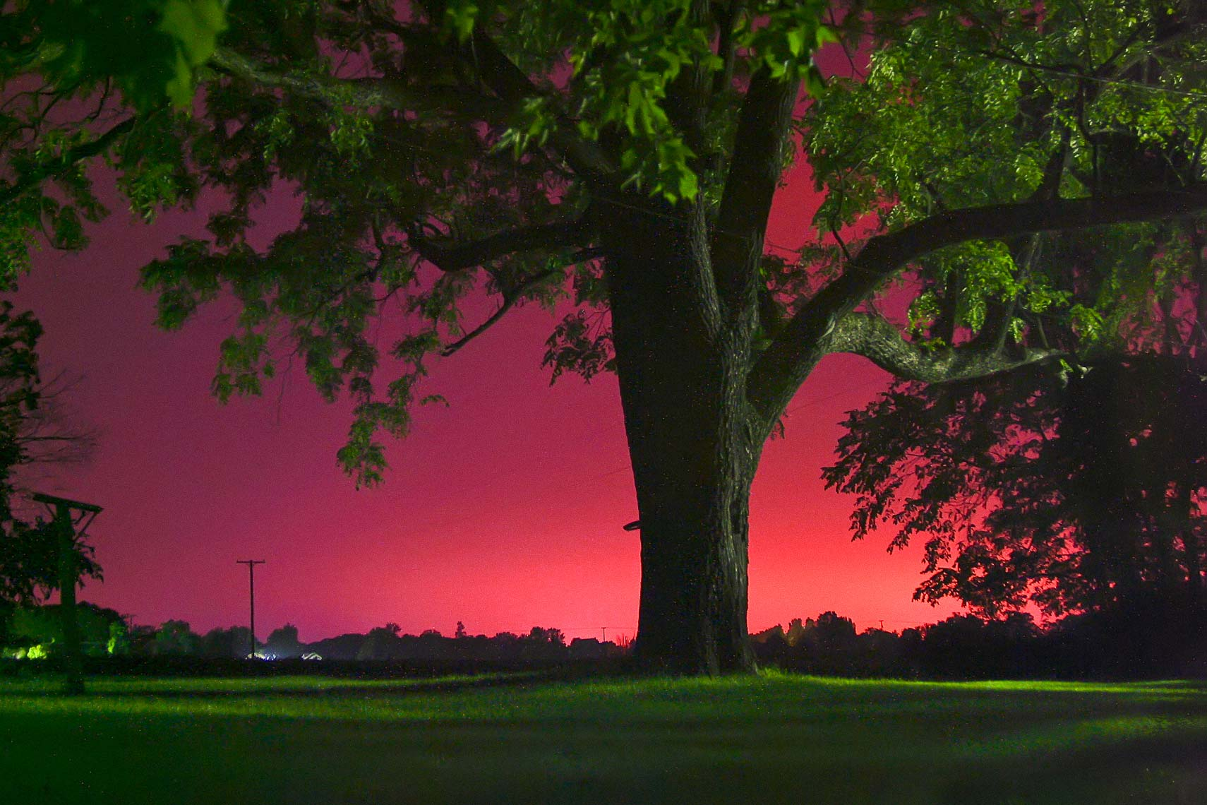 Michigan Tree Summer Night